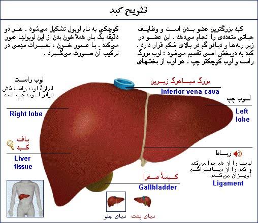 کبد چرب  یک التهاب کبدی است که در اثر تجمع بیش از اندازه ی چربی در بافت کبد ایجاد می شود