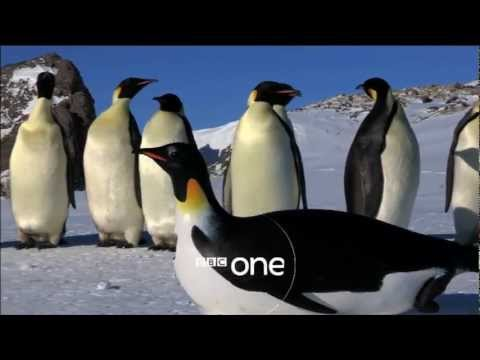 داونلود رایگان فیلم مستند زیبا و جدید درباره پنگوئن ها