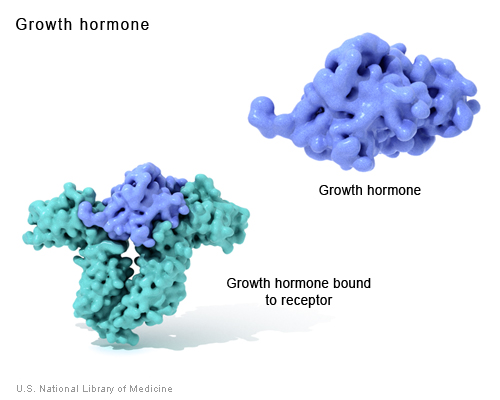 هورمون رشد growth hormone