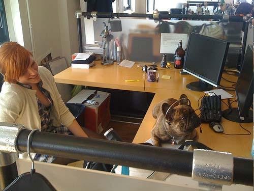 کارمندانی که در طول ساعات کار به سگ خانگی خود دسترسی داشته اند از استرس کمتری نسبت به همکاران خود برخوردار بوده اند